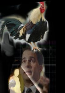 cock crow1
