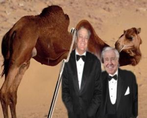 koch camel2
